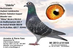 BE13-6151325