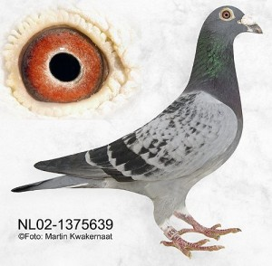 NL02-1375639
