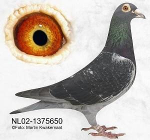 NL02-1375650
