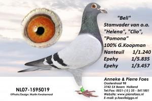 NL07-1595019