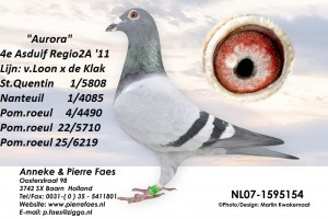 NL07-1595154