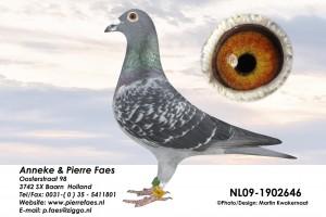 NL09-1902646