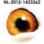NL12-1423362