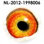 NL12-1998006