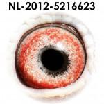 NL12-5216623