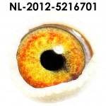NL12-5216701