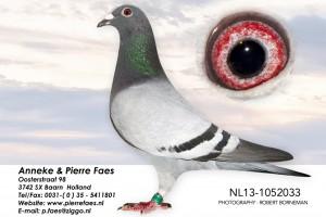 NL13-1052033