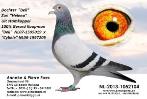 NL13-1052104