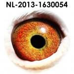 NL13-1630054