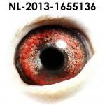NL13-1655136