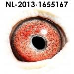 NL13-1655167