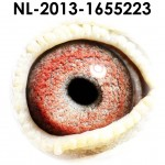NL13-1655223