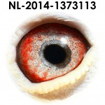 NL14-1373113
