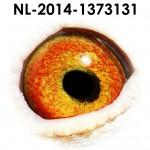 NL14-1373131