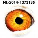 NL14-1373135