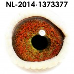 NL14-1373377