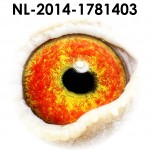 NL14-1781403
