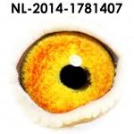 NL14-1781407