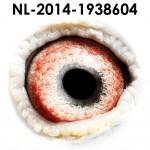 NL14-1938604