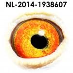 NL14-1938607